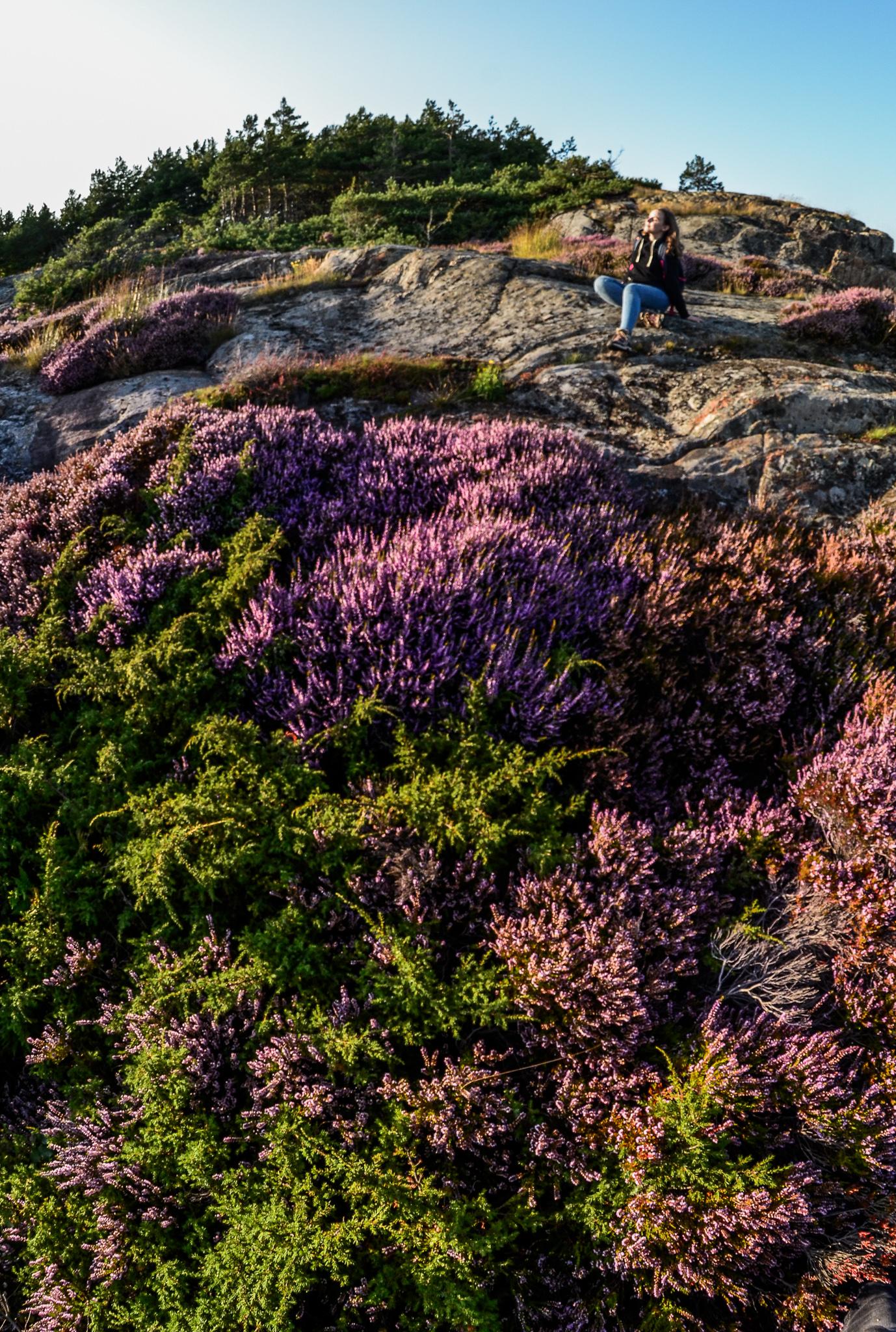 Norweskie wyspy: Kalvoya, Sandoya, Grundesundholmen