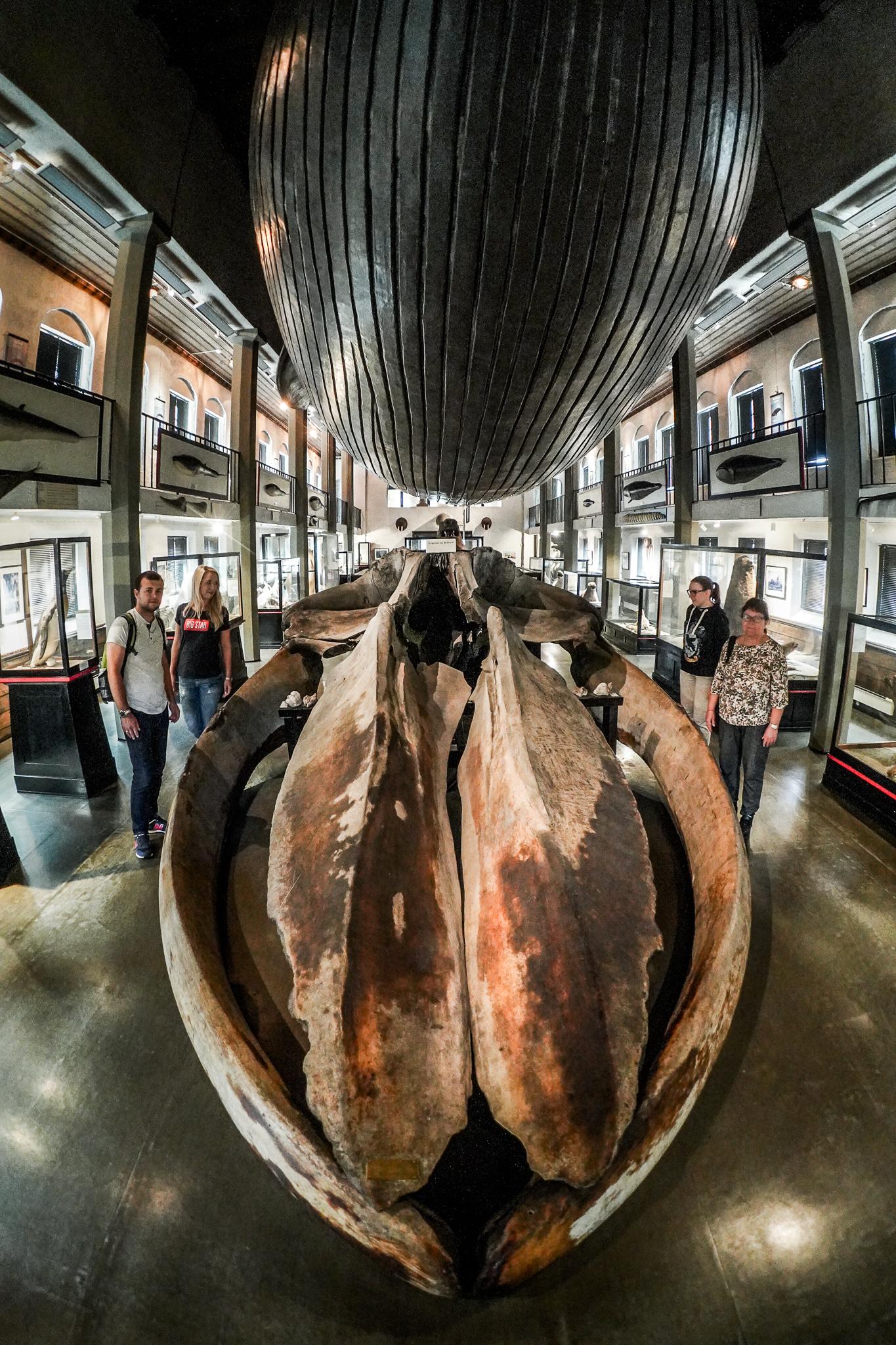 Sandefjord – miasto wielorybników