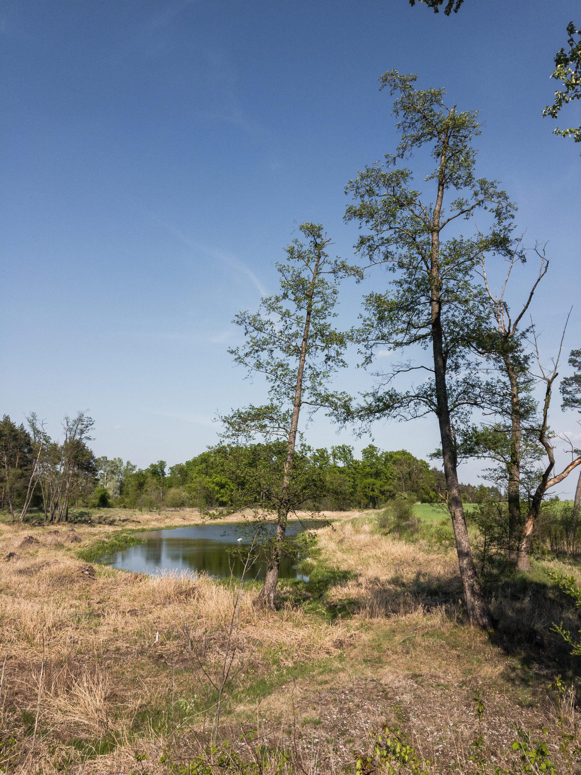 Rezerwat przyrody Dębno nad Wartą