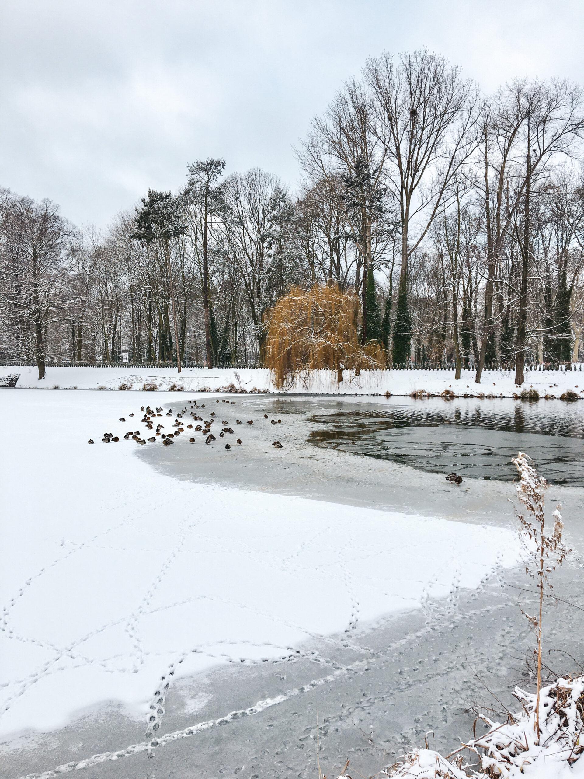 Zimowe wykopaliska