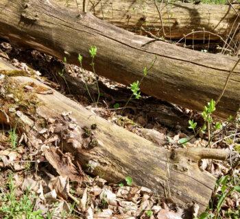 Wiosenne przebudzenie mocy